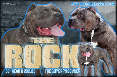 The_Rock_Banner2