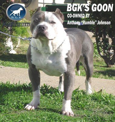 agoon1